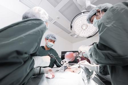 laparoscopic: veterinarian doctor in operation room for laparoscopic surgical,selective color technique Stock Photo
