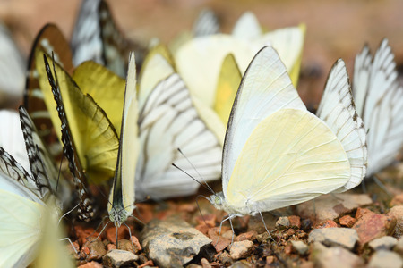 Butterfly on the ground, Nature in thailand photo