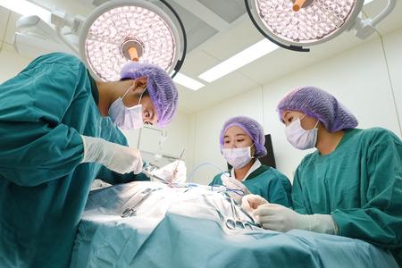 獣医外科手術室でグループ 写真素材