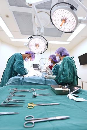 equipos medicos: grupo de cirug�a veterinaria en la sala de operaci�n