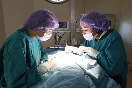 cirujano: dos cirujanos veterinarios en quir�fano Foto de archivo