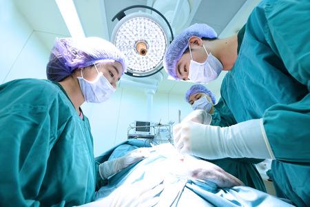 group of veterinarian surgery in operation room Standard-Bild