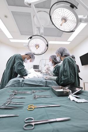 獣医外科手術室でグループを取る色域の選択技術と芸術的な照明