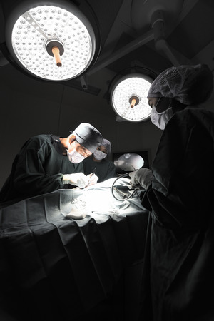 laparoscopic: group of veterinarian doctor in operation room for laparoscopic surgical take with selective color technique and art lighting