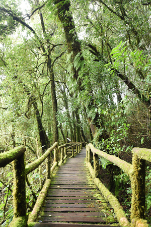 walk in: the walk way in the deep forest