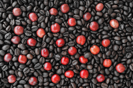 coffea: red ripe coffee on coffee beans backgournd take with selective color technique and art lighting Stock Photo