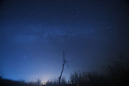 starry night: Night sky with the Milky Way over the forest and trees,Thailand.