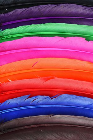 Beautiful colorful feather for background