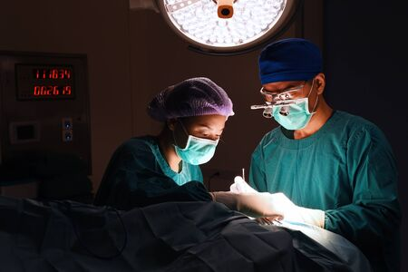 two veterinarian surgeons in operating room