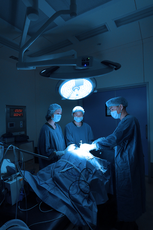 group of veterinarian surgery in operation room for laparoscopic take with art lighting and blue filter