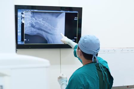 veterinary surgeon examining x ray in surgery