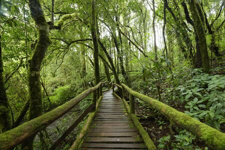 The walk way in the deep forest.
