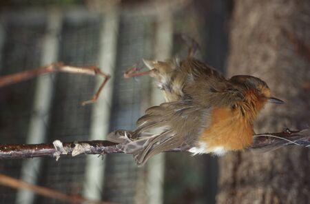 Bird Hunters Prey
