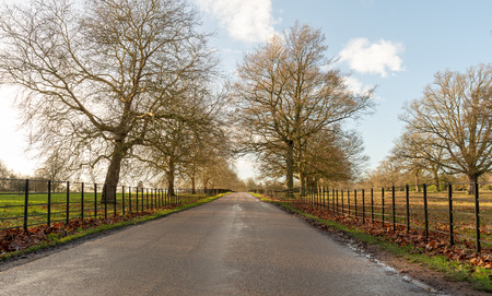 A fenced driveway disappears into the distance Banque d'images - 113833049