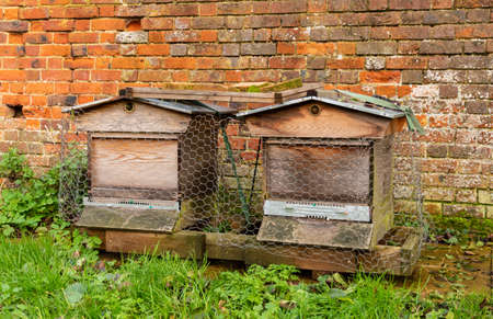 A pair of wooden beehives in an allotment in front of a brick wall