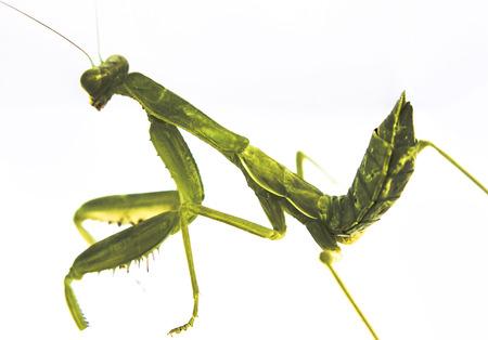 hopper: Grass Hopper hopping