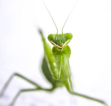 hopper: Grass Hopper waving