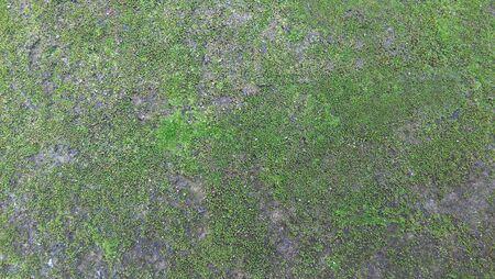 algas verdes: Las algas verdes Foto de archivo