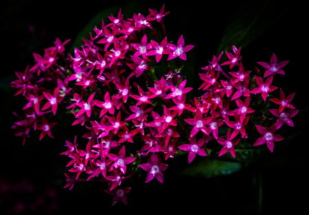 tiny frog: pink flowers