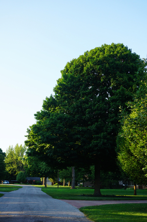 Green Trees and Villege Road of a small town. Frankfort city streets. Indiana state. Stock Photo