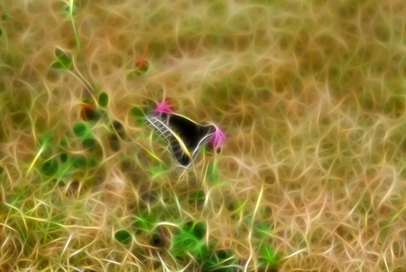 Black Butterfly sitting on Grass. Beautiful Insect in the nature habitat. The photo was processed with fractals.