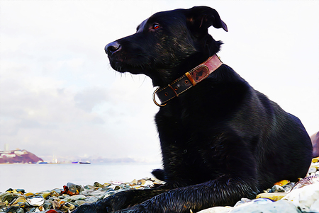 Big dog lies on sea stones and looks thoughtfully towards the sea. Far East of Russia, Vladivostok. oil painting picture