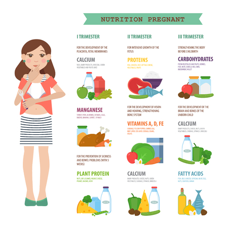 Nutrition pregnant. illustration about the nutrition of women in the different stages of pregnancy. The power scheme trimesters. Infographic with simple data and ration. Easy editable.