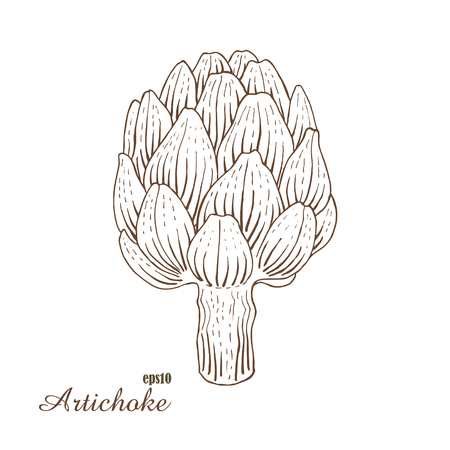 handdraw: Artichoke. Vector illustration in woodcut style. Hand-draw sketch.