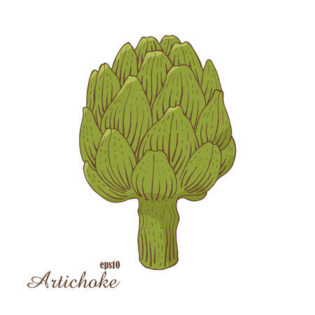 Artichoke. Color vector illustration in woodcut style. Hand-draw sketch.