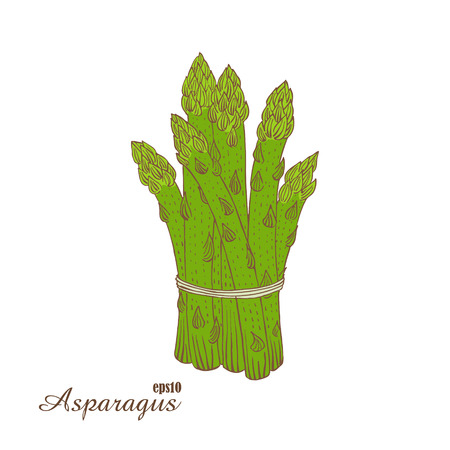 lithograph: Asparagus. Color vector illustration in woodcut style. Hand-draw sketch.
