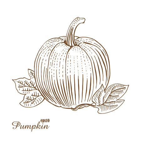 food plate: Pumpkin. Vintage vector illustration. Hand-drawn sketch in woodcut style.