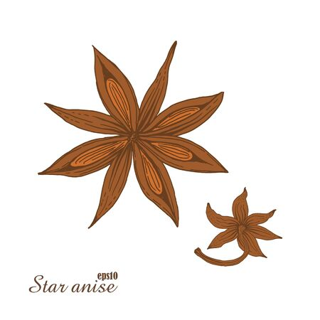 scratchboard: Star anise. Hand-drawn color sketch. Vector botanical illustration in woodcut style. Spices. The isolated vintage image on white background.
