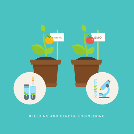 Breeding and genetic engineering. Vector concept of plants, vials, molecule DNA, microscope in the flat style. Concept perfect for agricultural or scientific brochures, infographic, other materials. Çizim
