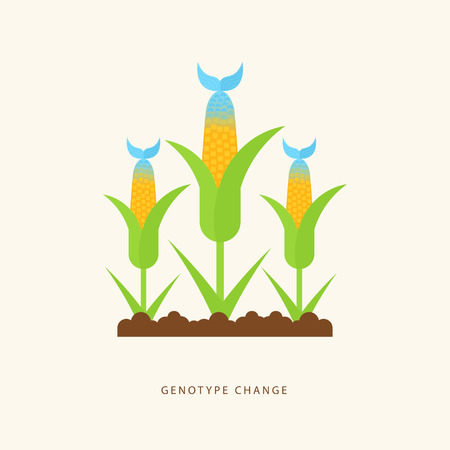 Genotype change. Vector illustration with hybrid corn and fish in the flat style. GMO product. Colorful concept perfect for agricultural or scientific brochures, banners, advertising. Çizim