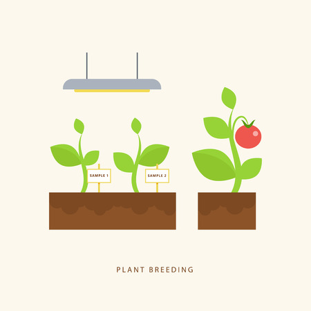 breeding: Plant breeding. Vector scene in flat style. Perfect for agricultural or scientific brochures, infographic, other materials.