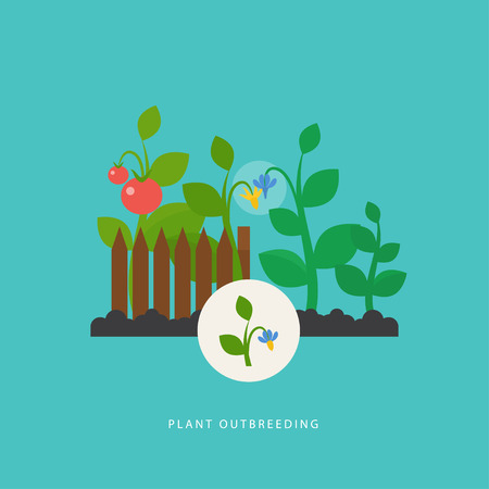 Plant outbreeding. Vector scene which show crossing of different types of plant. Flat style. Perfect for agricultural or scientific brochures, infographic, other materials.