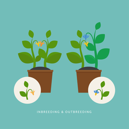 Inbreeding and outbreeding. Vector scene which show crossing of different types of plant. Flat style. Perfect for agricultural or scientific brochures, infographic, other materials.