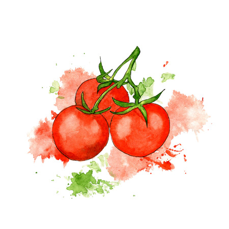 Watercolor illustration of red tomatoes on the branch. Hand drawn a sketch with splashes and spots.
