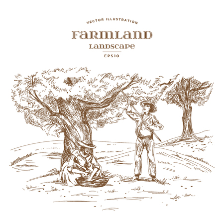 Farmer and Woman with a basket harvested olives under the tree. The traditional gathering of a crop. Farmland landscape with olive garden. Hand drawn vector illustration in woodcut style.
