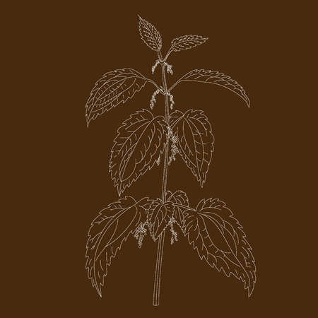 nettle: Nettle plant isolated on brown background Illustration