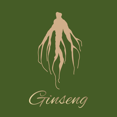 tonic: Panax ginseng root Illustration