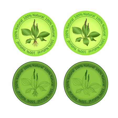 weegbree: Plantain labels Stock Illustratie