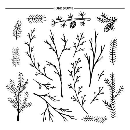 abetos: Dibujado a mano colección de ramas de los árboles. Ilustración del vector. Vectores
