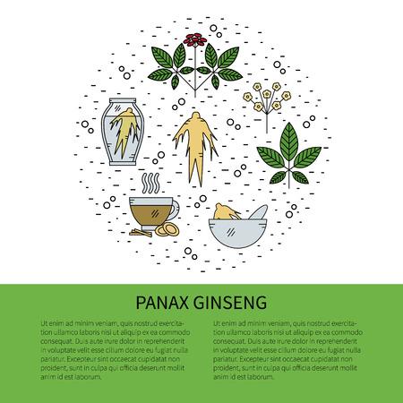 Flyer en ligne ligne style.Panax Ginseng icônes isolé sur fond blanc illustration vectorielle.