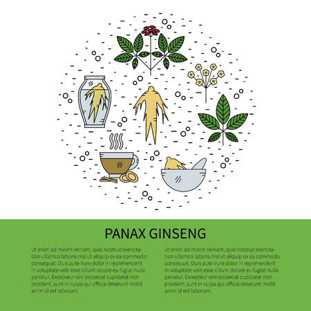 oriental medicine: Flyer in line style.Panax Ginseng line icons isolated on white background vector illustration.