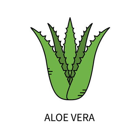 Aloe Vera isolated on white background vector illustration in line style.
