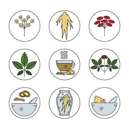 oriental medicine: Set of Panax Ginseng line icons.Vector illustration.