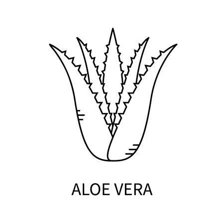 アロエベラは、線のスタイルの白い背景ベクトル図に分離されました。  イラスト・ベクター素材