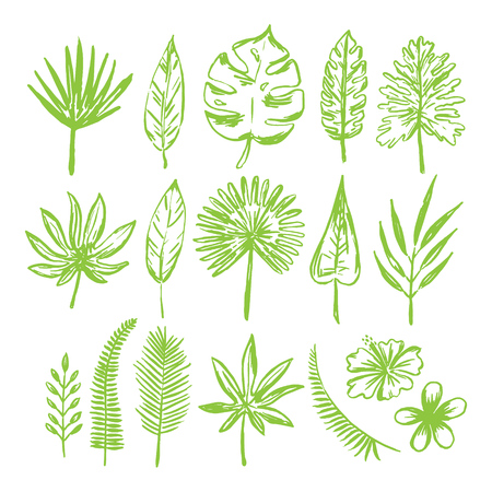 Set of hand drawn tropical leaves and flowers.Vector illustration. Illustration
