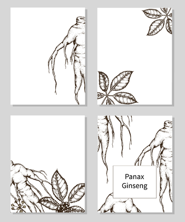 Set of templates with hand drawn Panax Ginseng. Vector illustration. Ilustracja